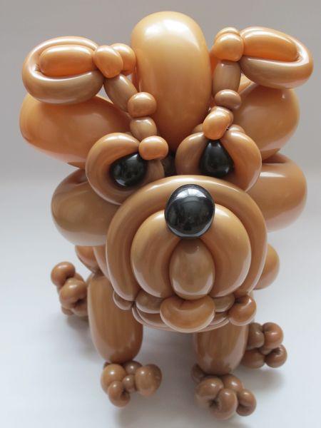 bulldog6