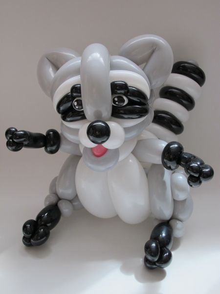 racoon3